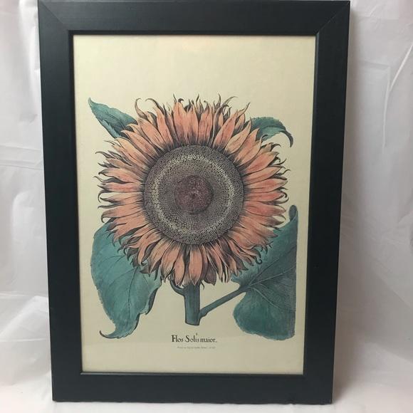Flos Solis Maior Framed Sunflower Framed Print